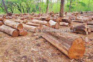 Kayu Jati TPK Perhutani Untuk Furniture Berkualitas