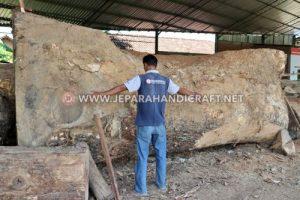 Kayu Trembesi Bahan Baku Furniture Murah Pengganti Jati